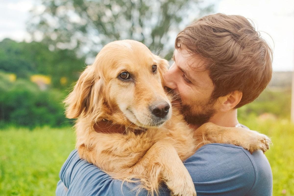 راهنمای کامل خرید لوازم سگ (چه چیزهایی و از کجا بخریم؟)