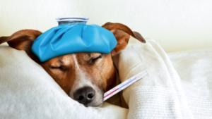 بیمارشدن سگ