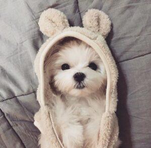 سگ سفید با لباس