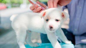 واکسن زدن سگ