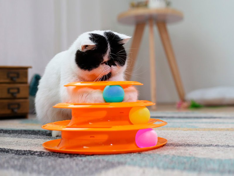 اسباب بازی برج گربه
