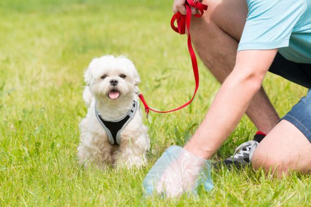 برداشتن مدفوع سگ از زمین