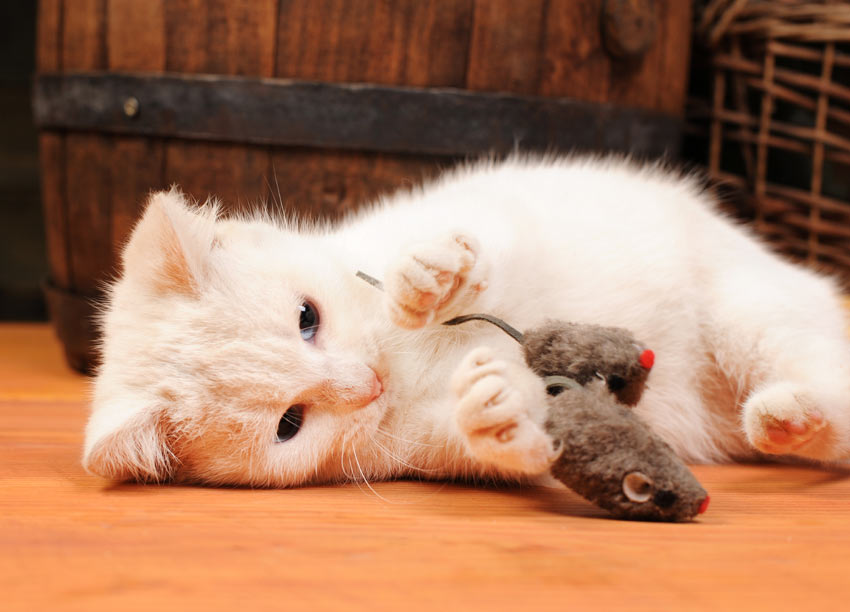 موش اسباب بازی گربه