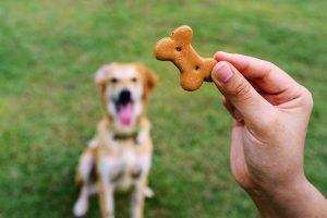 خوراکی تشویقی برای سگ