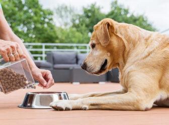 همه چیز در مورد غذای سگ در سنین مختلف