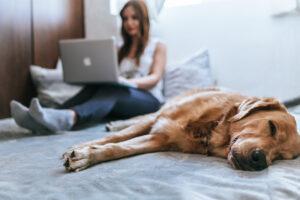 سگ در حال استراحت