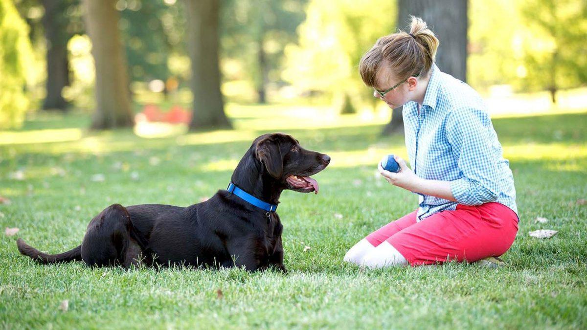 روش تربیت سگ