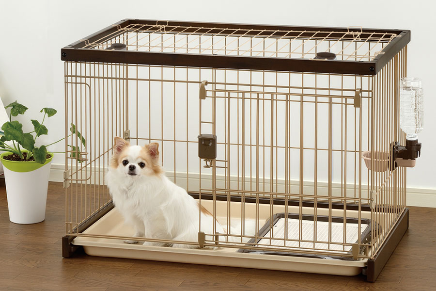 سگ در باکس