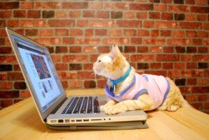بازی گربه با لپ تاپ