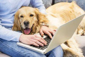 سگ خوش رفتار
