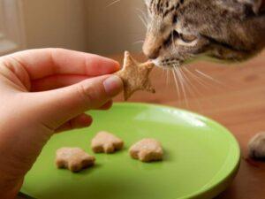 تشویقی دادن به گربه