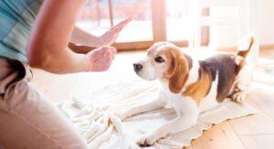 آموزش جای ادرار به سگ