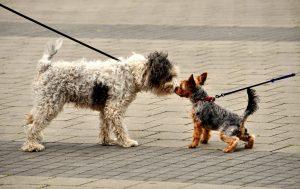 اجتماعی کردن سگ