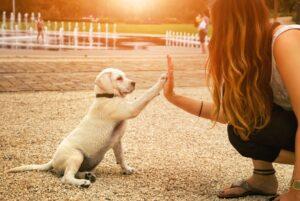 دست دادن توله سگ به صاحبش