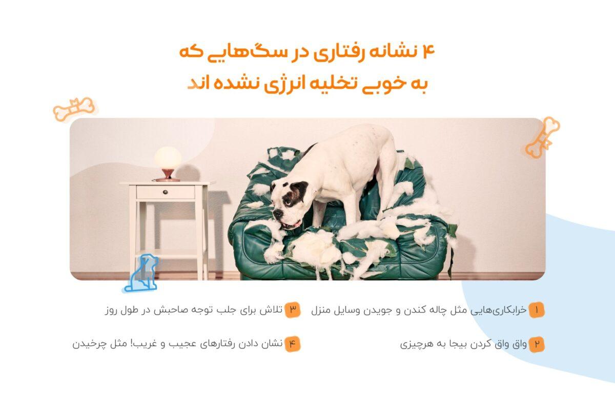 نشانه های تخلیه نشدن انرژی سگ ها