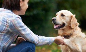 تربیت سگ بالغ