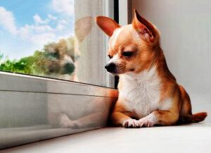 سگ در خانه