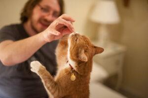 تشویقی خوراکی برای گربه
