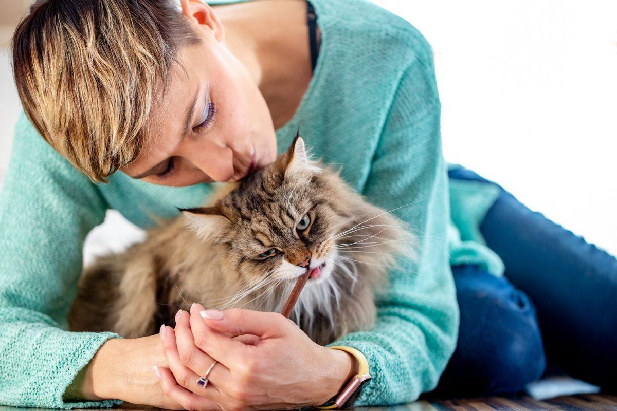 گربه در حال تشویقی خوردن