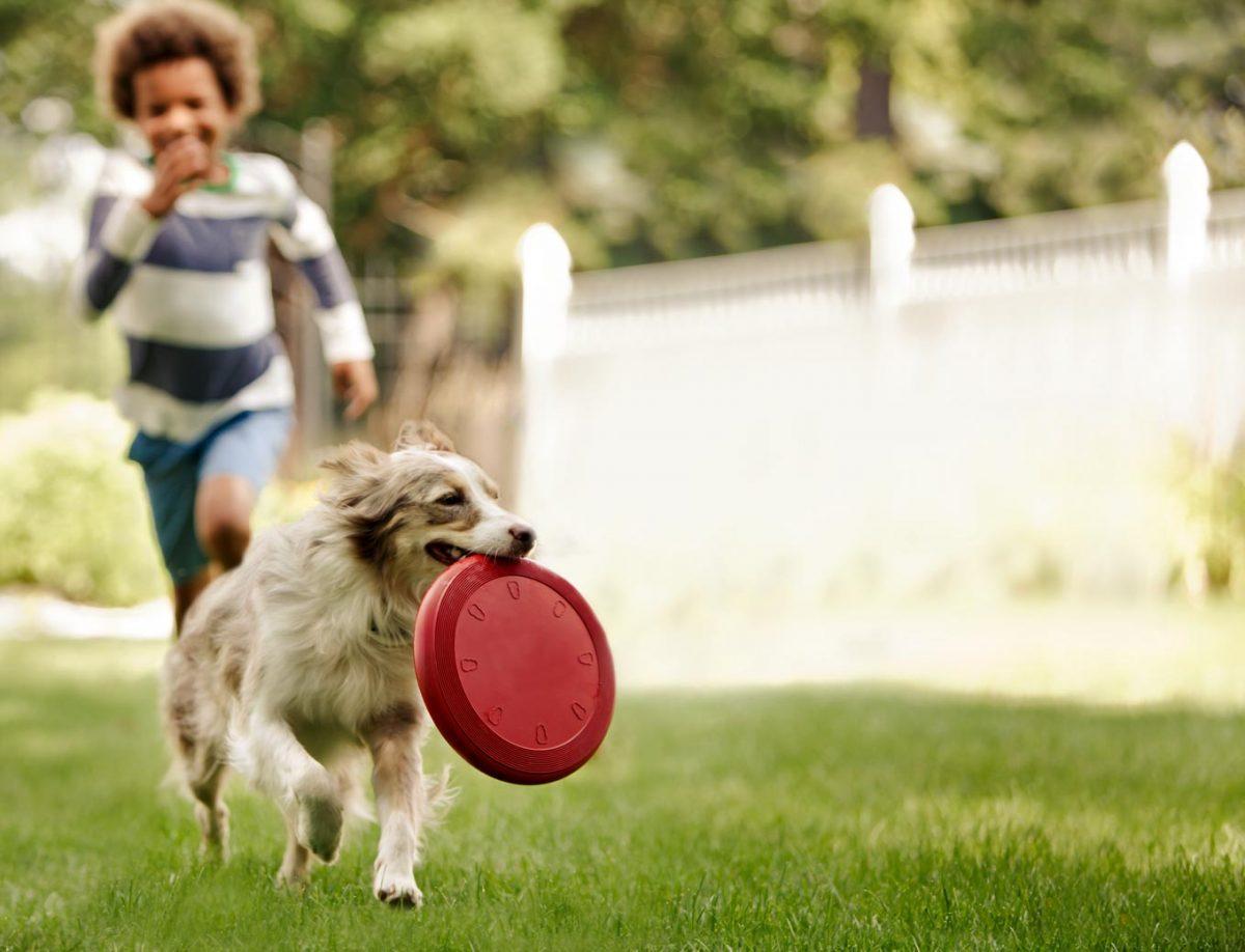 بازی با سگ