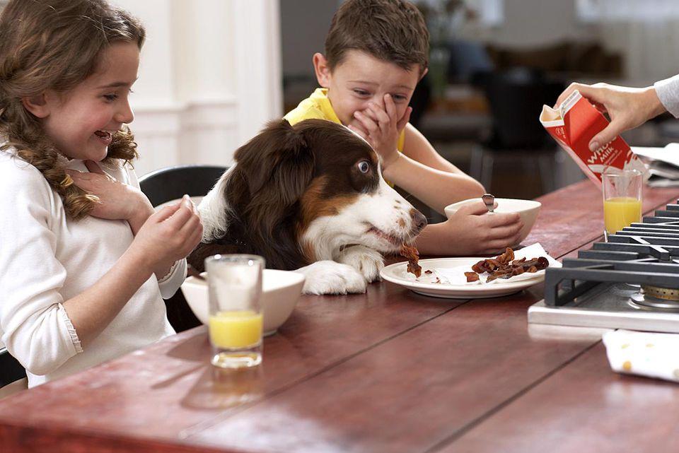 التماس سگ برای غذا