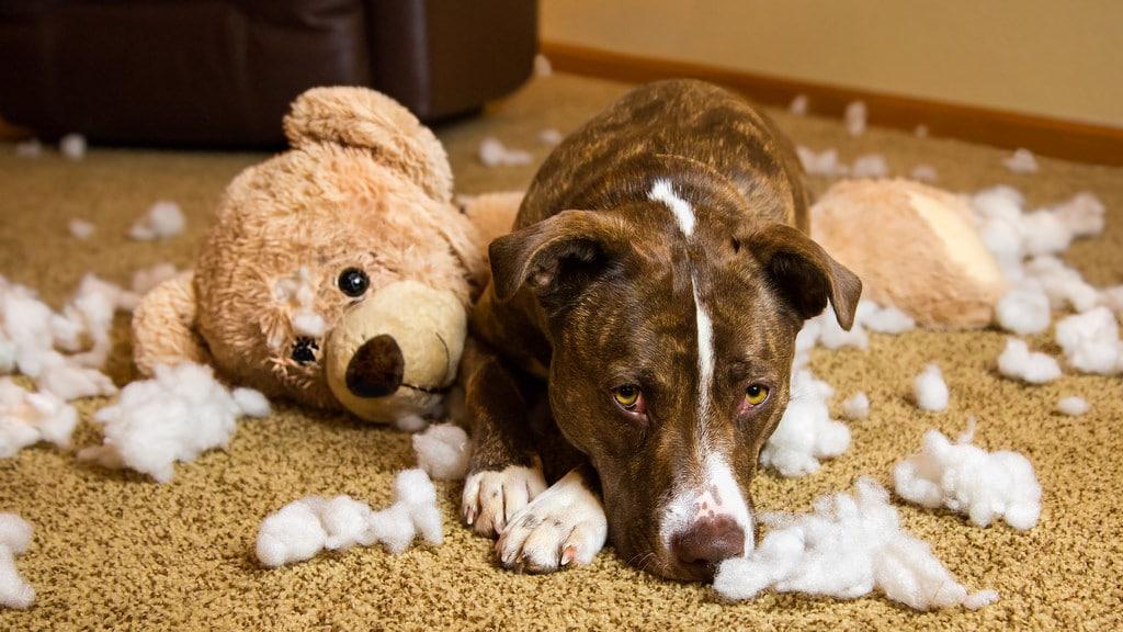 خرابکاری سگ