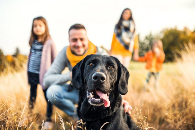 تربیت بهترین سگ