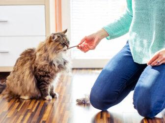 تمام چیزهایی که باید درمورد تشویقی گربه بدانید! (راهنمای خرید)