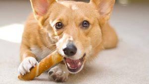 تشویقی خوردن سگ
