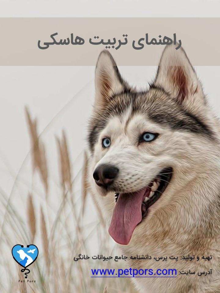 کتاب تربیت سگ هاسکی