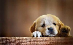 توله سگ مریض
