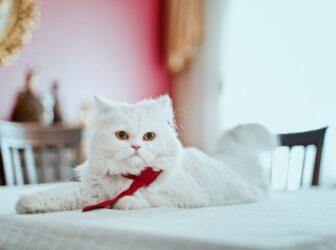 چک لیست و راهنمای خرید وسایل و لوازم مورد نیاز گربه