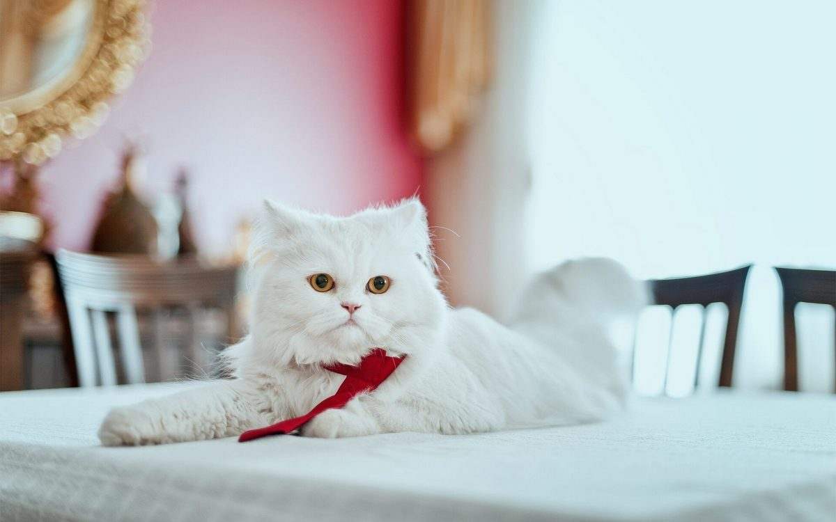 راهنمای خرید وسایل گربه