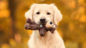 بازی سگ با اسباب بازی