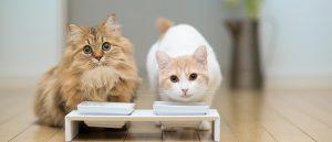 غذا خوردن گربه ها از ظرف مخصوص