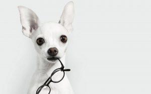 سگ علاقه مند به عینک