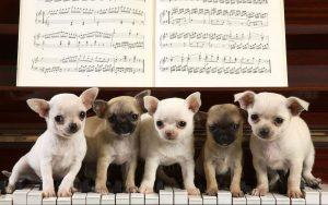 توله سگ های شیطون و پیانو زدن