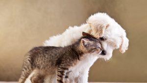 ارتباط توله سگ با گربه