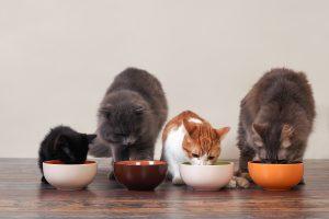 غذا خوردن گربه ها