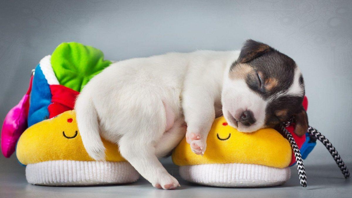 جای خواب راحت برای توله سگ