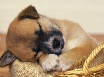 دلایل استفراغ سگها (رایجترین بیماریهایی که باعث استفراغ در سگها میشن)