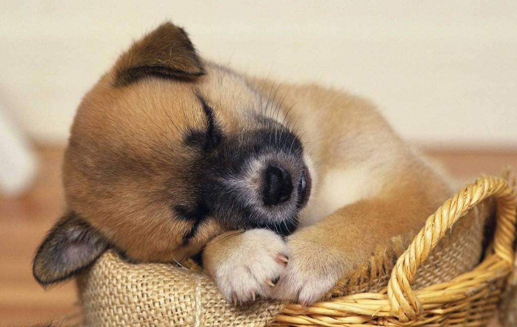 دلایل استفراغ سگها ( رایجترین بیماریهایی که باعث استفراغ در سگها میشن)