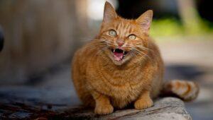 پرخاشگری گربه ماده