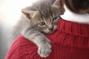 رابطه عاطفی گربه و صاحبش