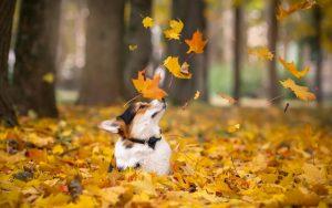 بازی سگ با برگ ها