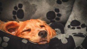 جای خواب مخصوص سگ