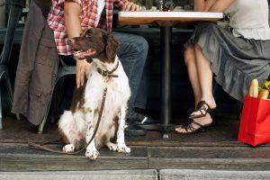 سگ قلاده ای در فضای باز