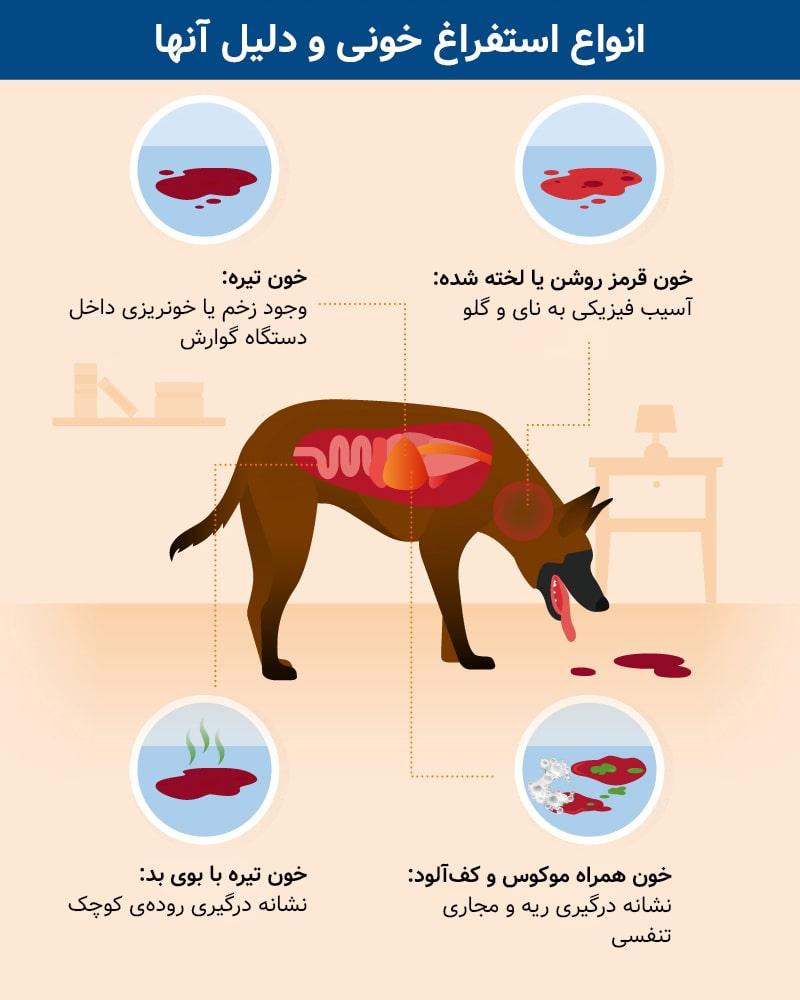 اینفوگرافی بررسی علل خون بالا آوردن سگ ها
