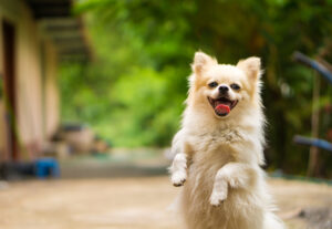 سگ خوشحال - پت پرس