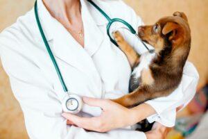 دوستی سگ با دامپزشک